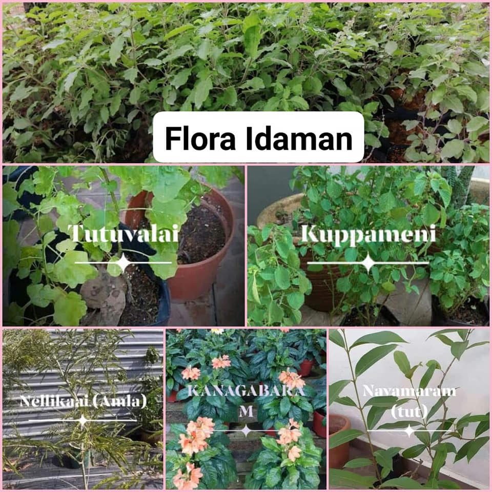 Indian Herbal Plants – FLORA IDAMAN